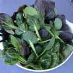 bok-choy-and-tatsoi-harvest